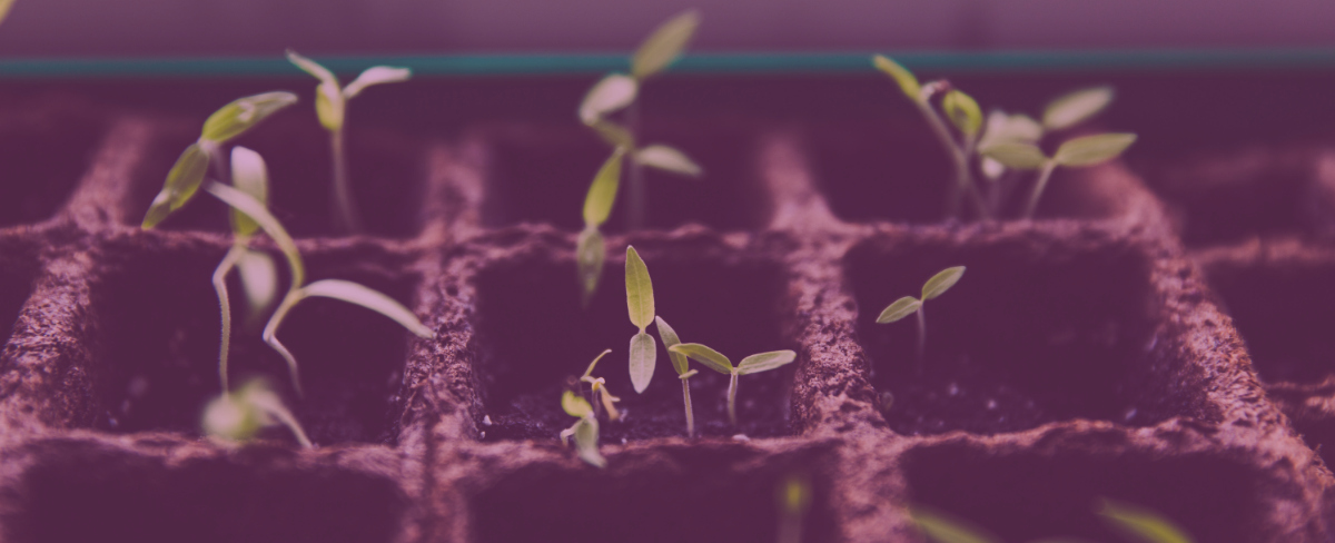 What Is Content Seeding?