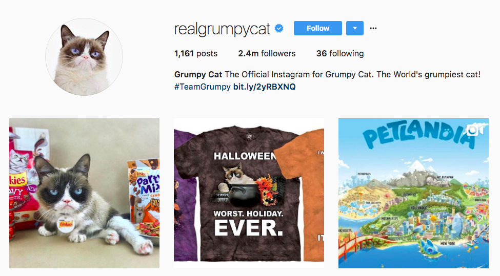 Grumpy Cat Instagram Influencer