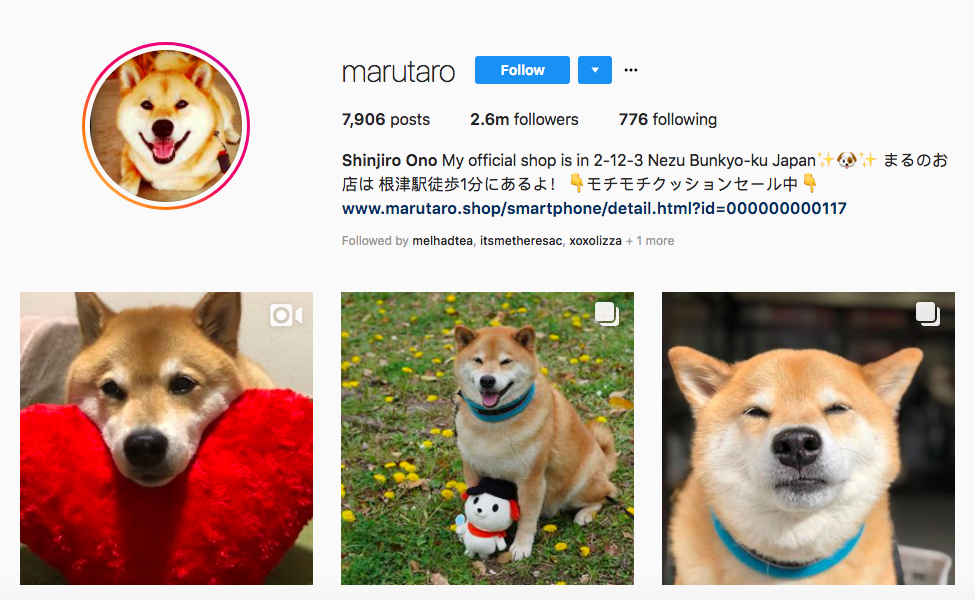 Shinjiro Ono Top Pet Influencers