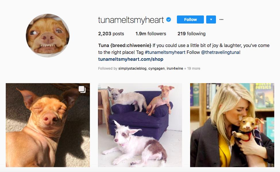 Tuna top pet influencers