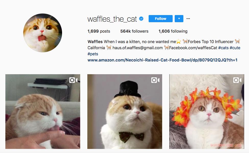 Waffles the Cat top pet influencers