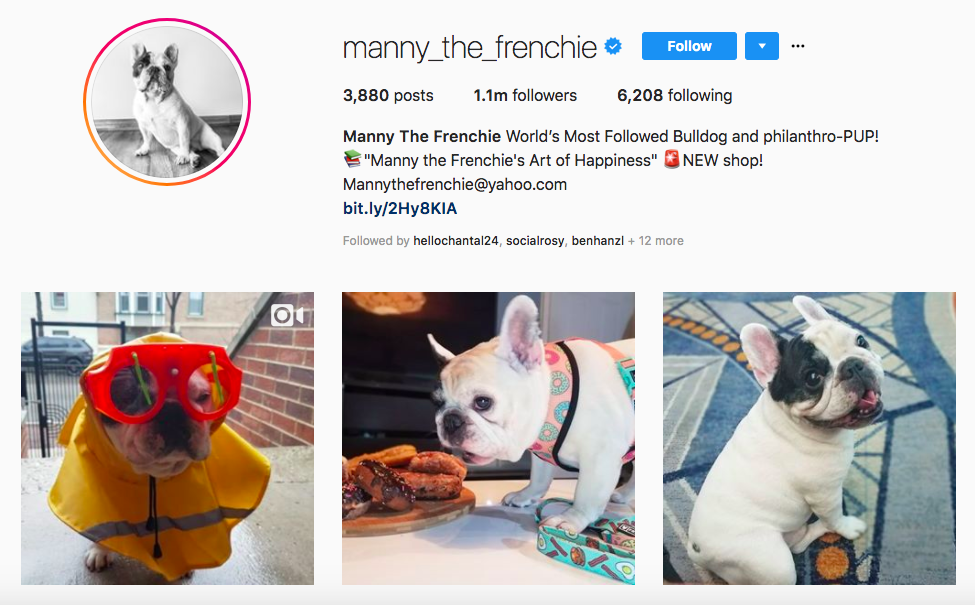 Manny The Frenchie top pet influencers
