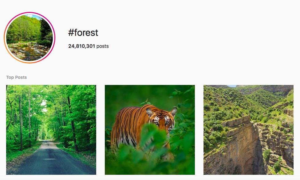best outdoor instagram hashtags #forest