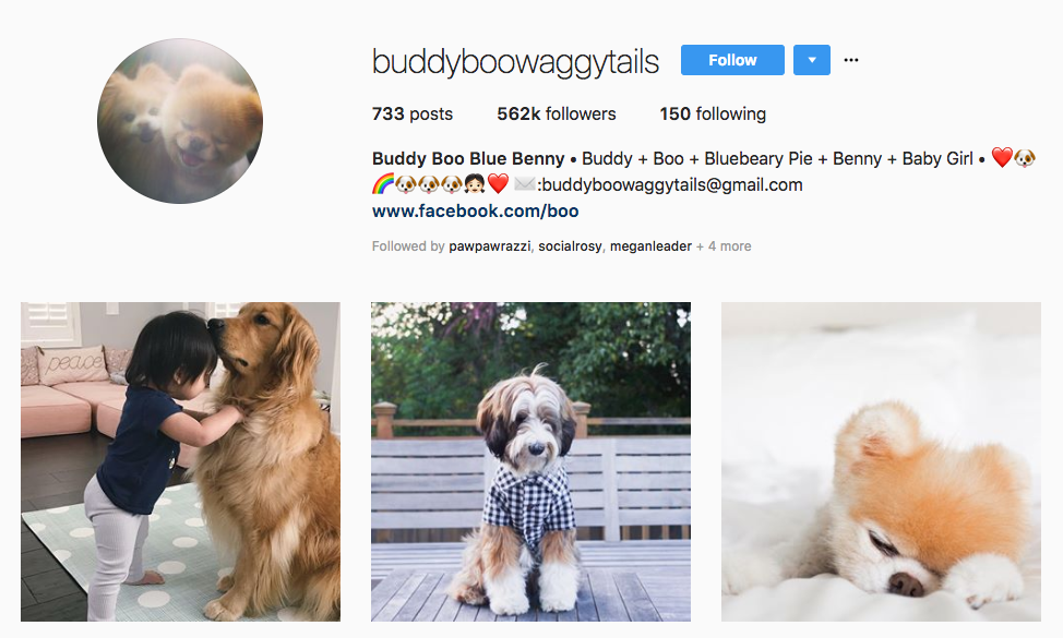Buddy Boo Blue Benny top online influencers