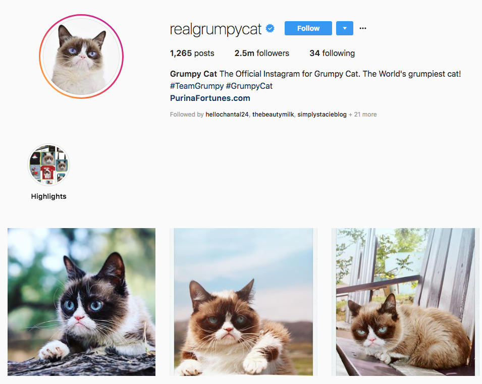 Grump Cat Top Online Influencers