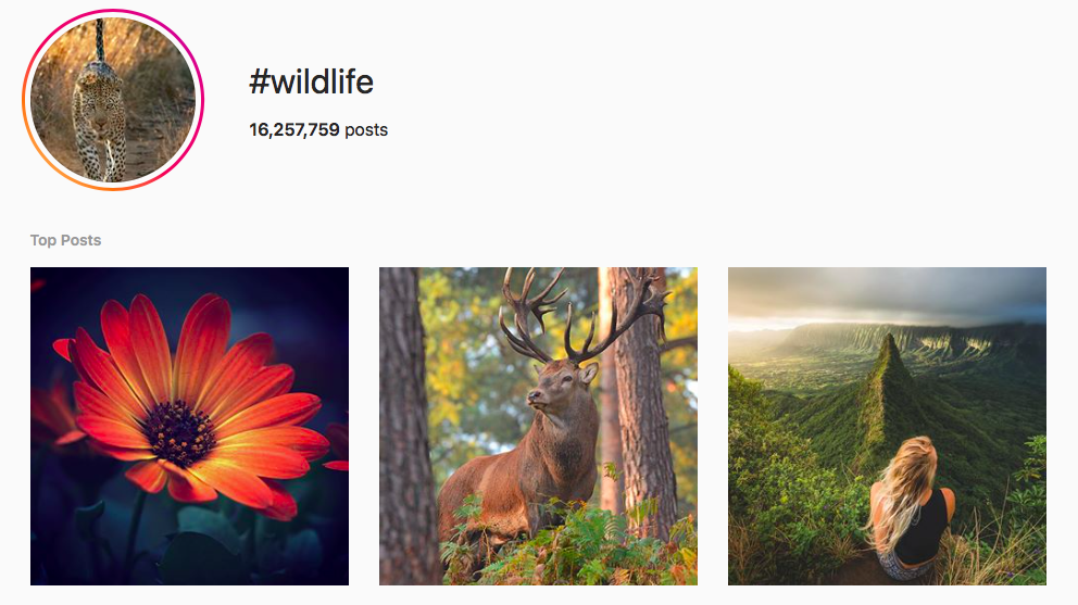 #wildlife best instagram photography hashtags