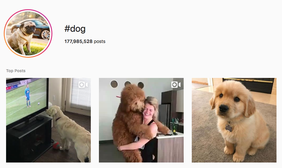 #dog top instagram hashtags